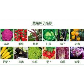 湘西线椒种子供应厂家 辣椒高产种子