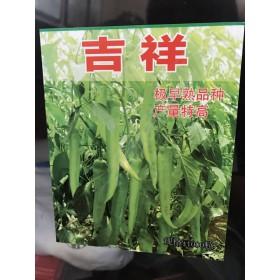 湛江尖椒种子厂家 羊角椒种子