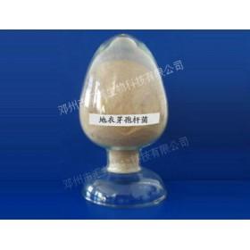 汇邦生物地衣芽孢杆菌/枯草芽孢杆菌价格/地衣芽孢杆菌厂家